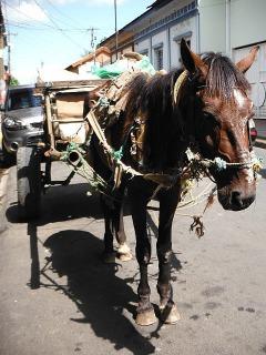 Pony! Leon
